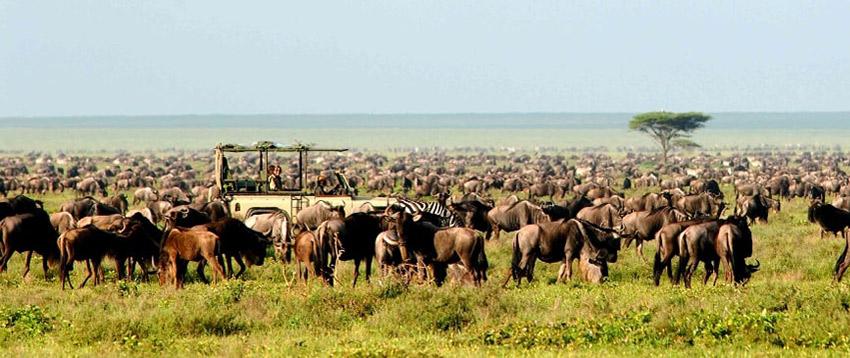 12 Days Safari Tanzania
