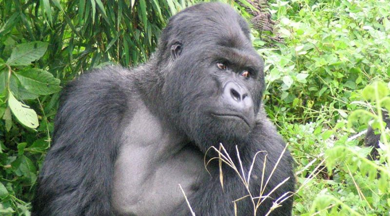https://www.africajoytours.com/uganda-safari-tours/