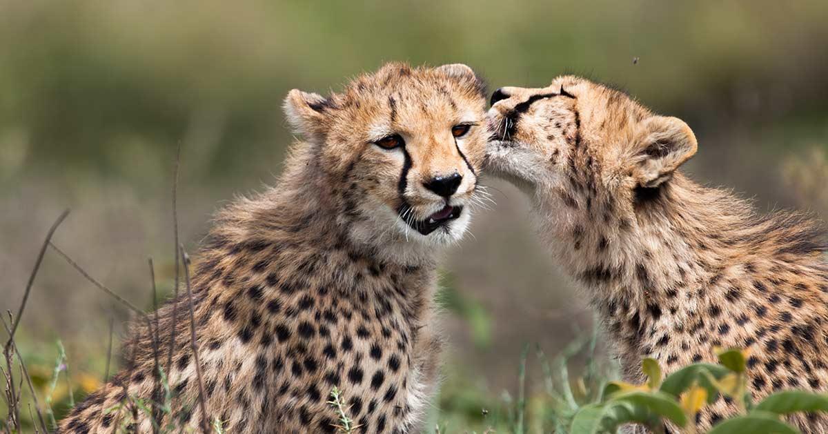 10 days family safari Tanzania