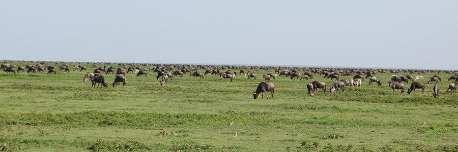 5 Days Serengeti Wildebeest Migration tour
