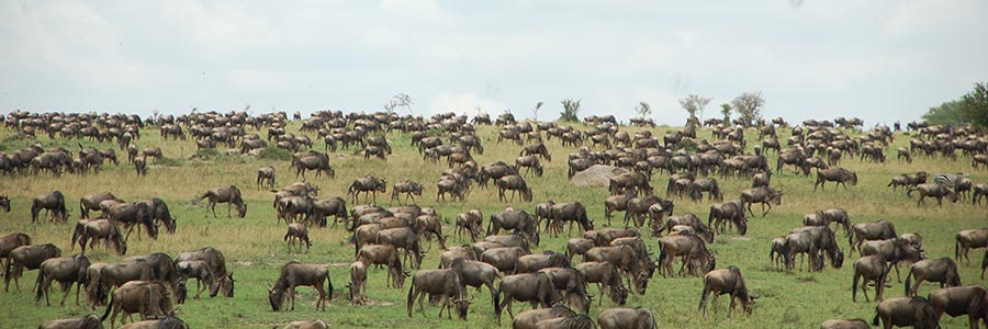 7 Day Safari Serengeti Wildebeest Migration