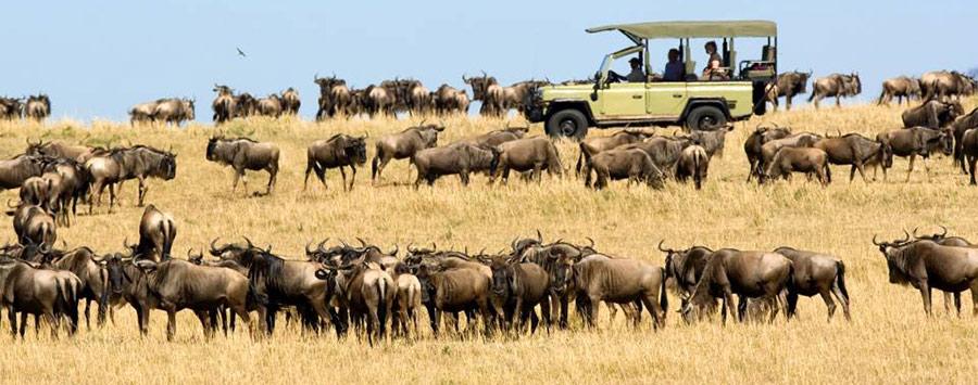 8 days luxury Safari Tanzania