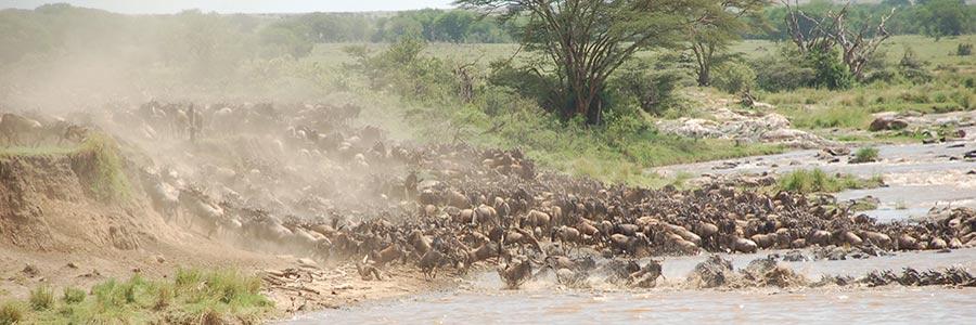 8 Days Tanzania wildlife Safari Tour