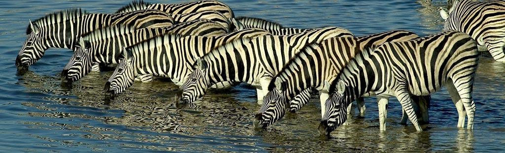 13 days Tanzania wildlife safari Zanzibar beach holiday