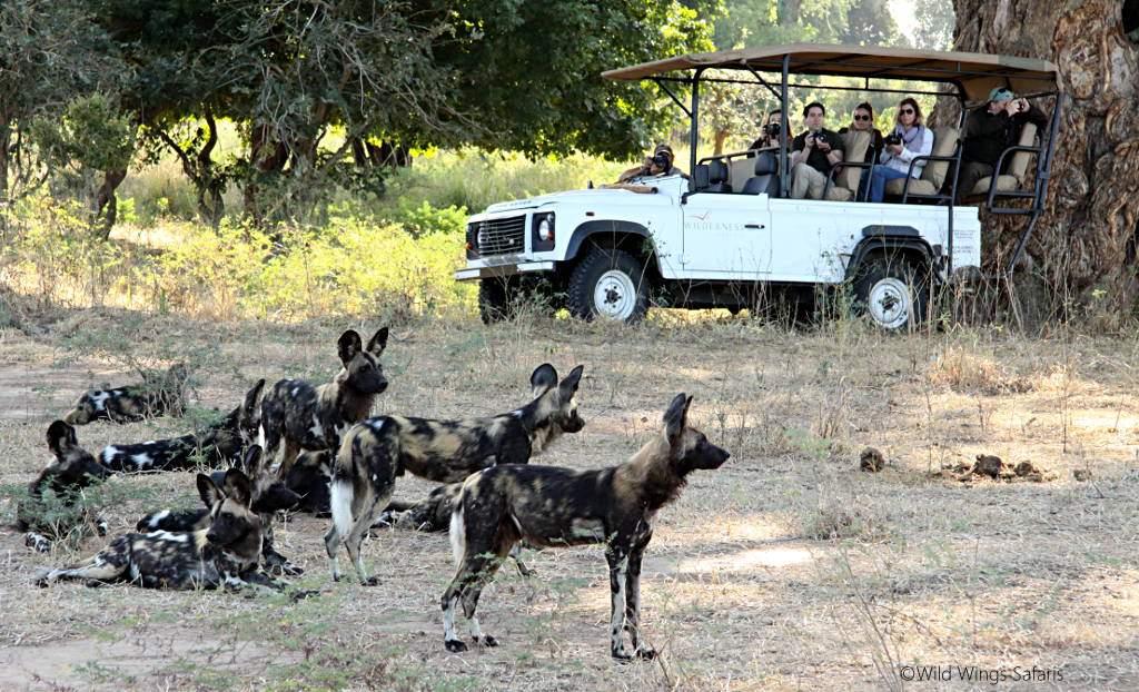 https://www.africajoytours.com/southern-tanzania-safari-tours/