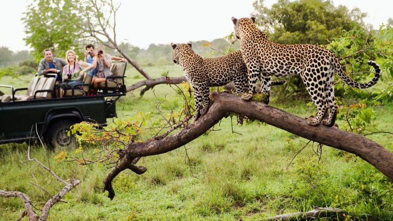 14 Days Tanzania wildlife safari and Zanzibar beach