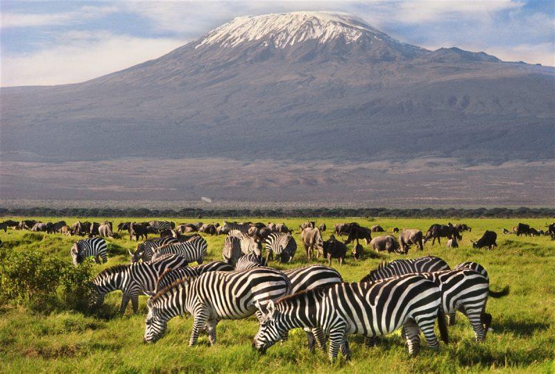14 Days Combined Kenya Tanzania Zanzibar Safari